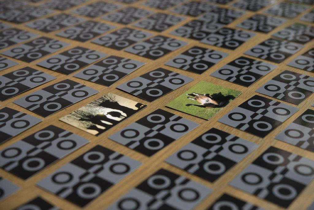 Agripix.eu-fotografisch-geheugenspel-4-1-1024x683.jpg